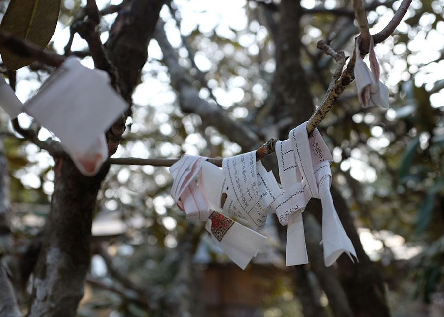 Fortunes tied to a tree outside Tamaki Shrine in Totsukawa Village