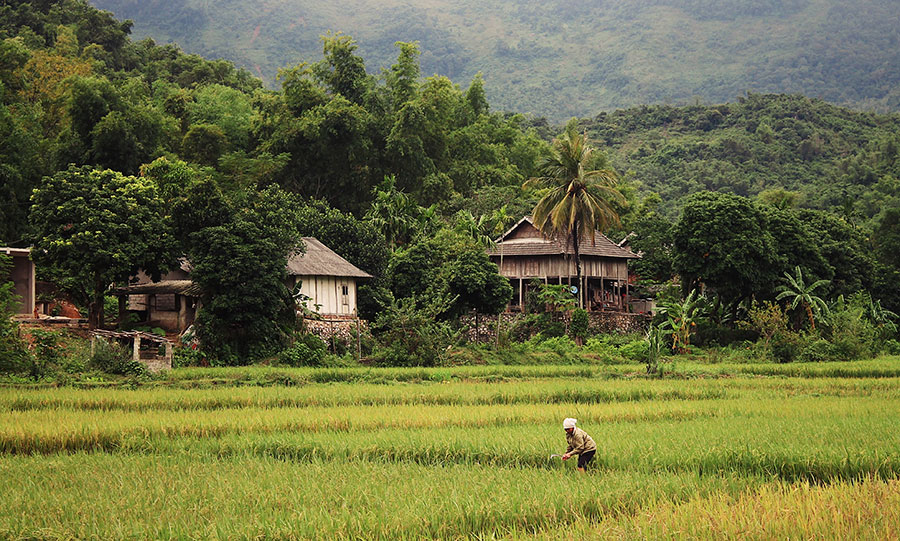 A woman tends to rice fields in rural Mai Chau. Photo: Supplied
