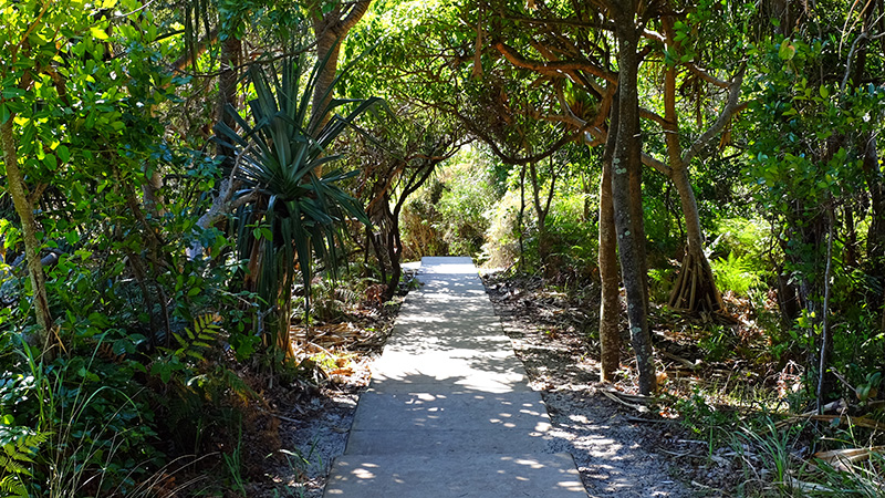 The pathway from Captain Cook Lookout to the beach. Credit: Chris Ashton