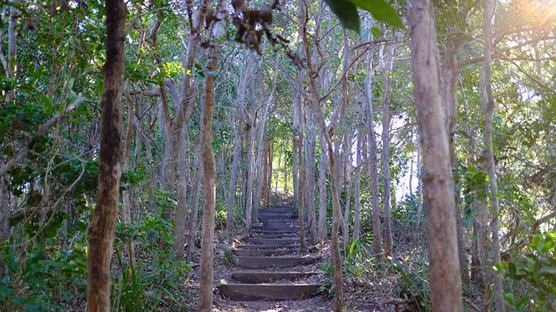 Tallow Ridge Track - part of the Byron Bay Lighthouse Walk. Photo: Chris Ashton