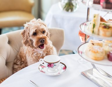 The ultimate pet staycation. Credit: The Langham Sydney