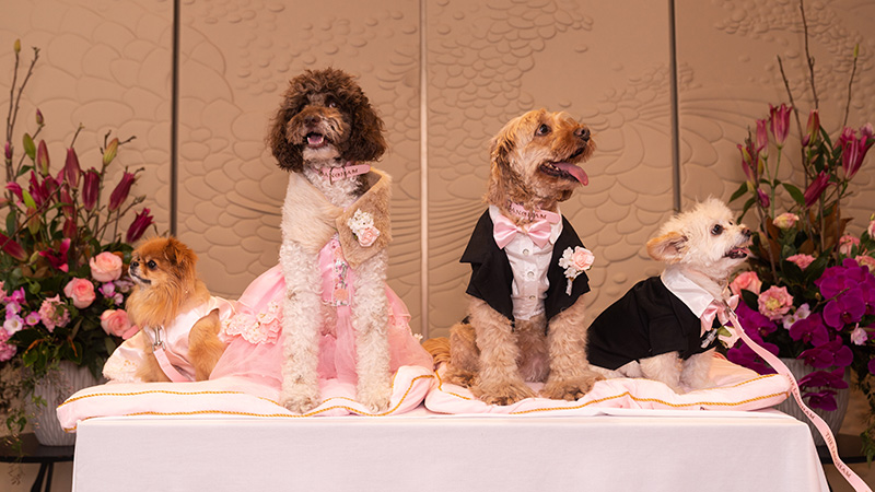 The greatest wedding portrait ever. Credit: The Langham Sydney