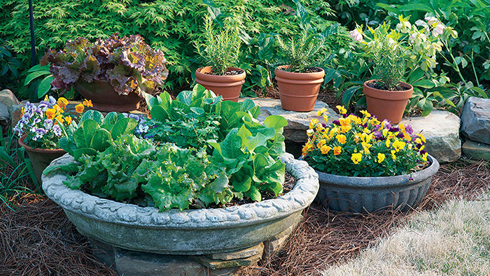 Five Tips For Container Gardening Success Arizona Jewish Life