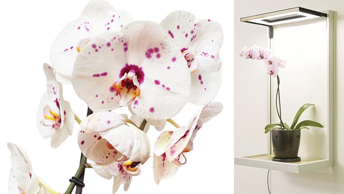 Keeping Orchids Beautiful And Blooming Arizona Jewish Life