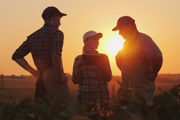 Farmer with employees in field at sunset