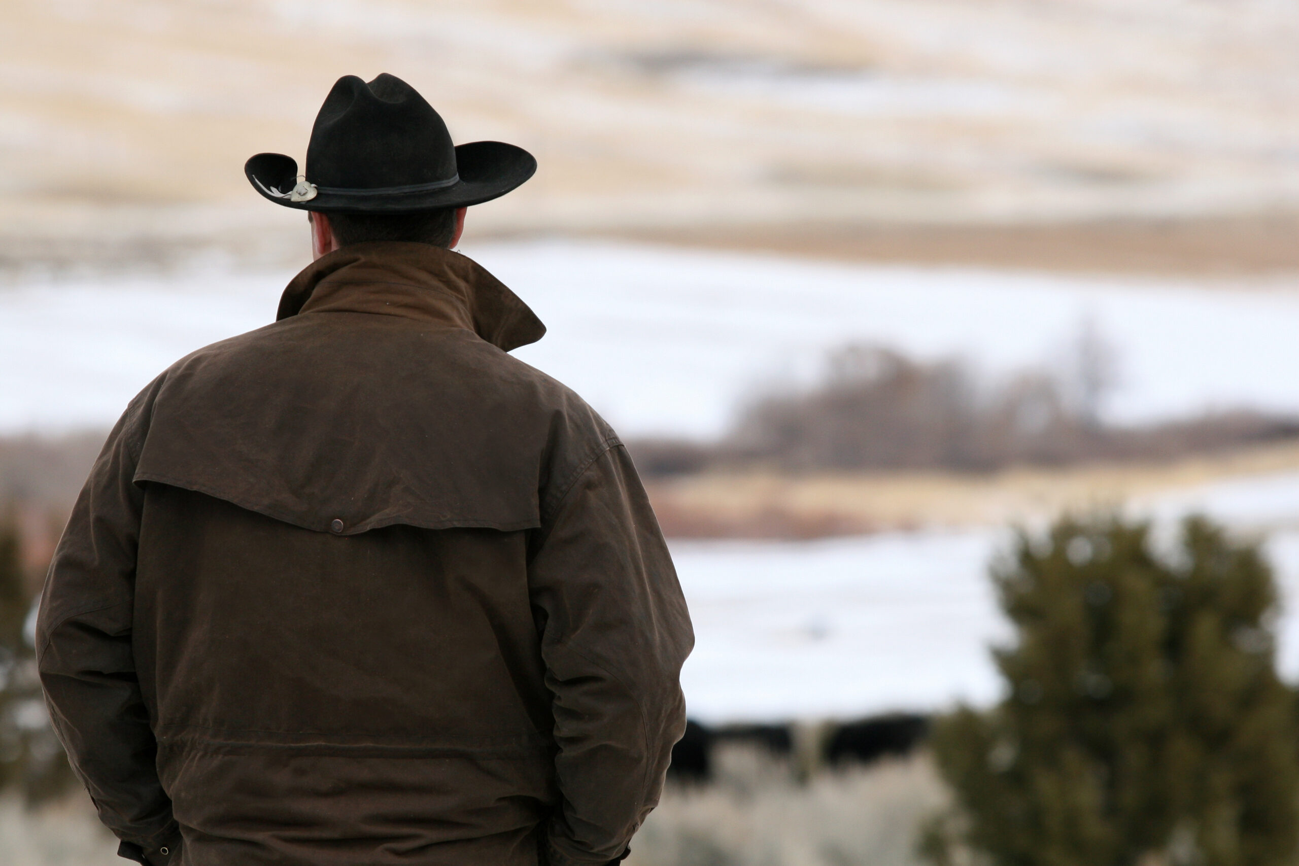 Man in cowboy hat looking over field