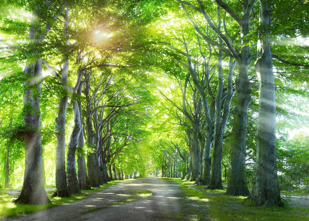 Peaceful Road, Bright Journey