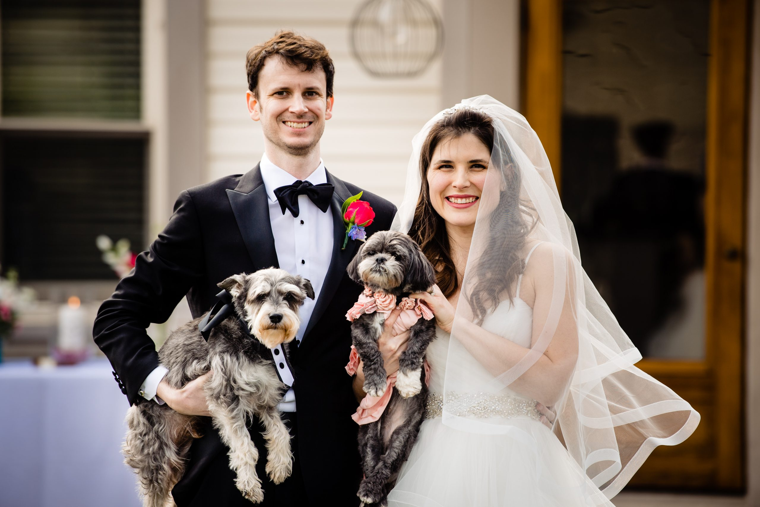 A first family portrait of a bride and groom and their two dogs.