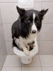 Urinary Tract Infection Dog