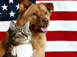 dog_cat_flag