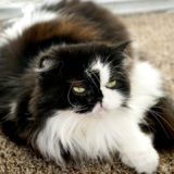 Your Cat is a Vomit Comet After New Food