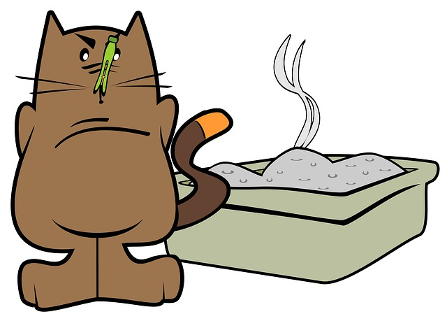cat health smelly pee