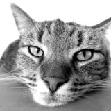 Myths Busted: 8 Myths About Cats Revealed
