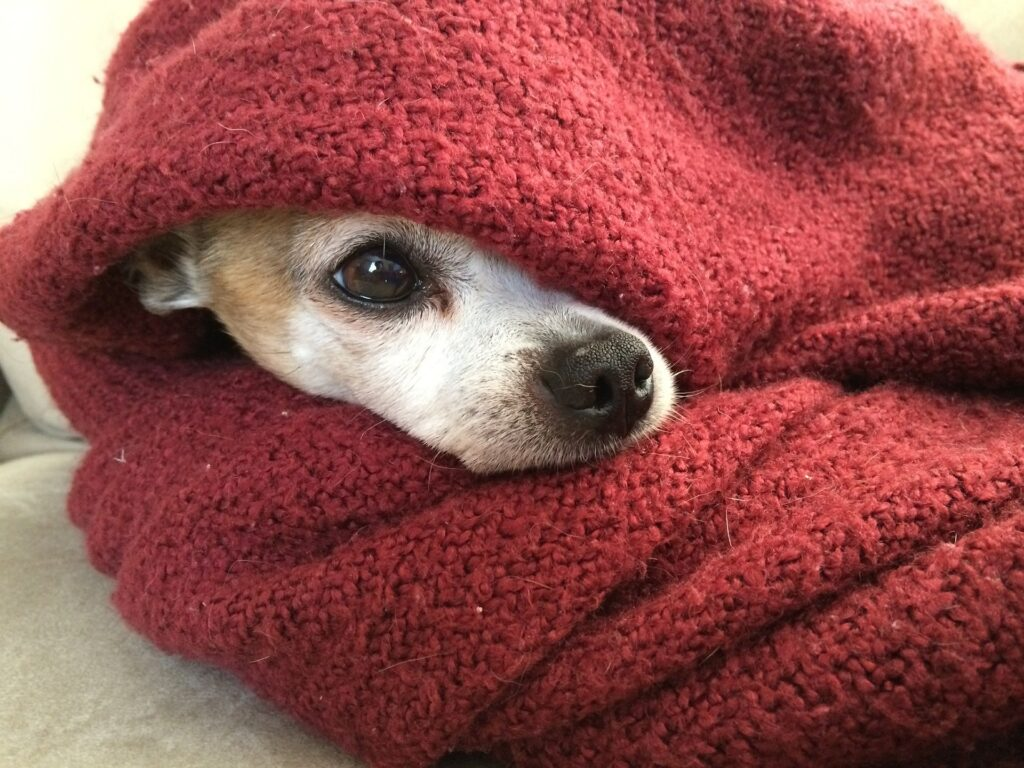 dog cold winter safety