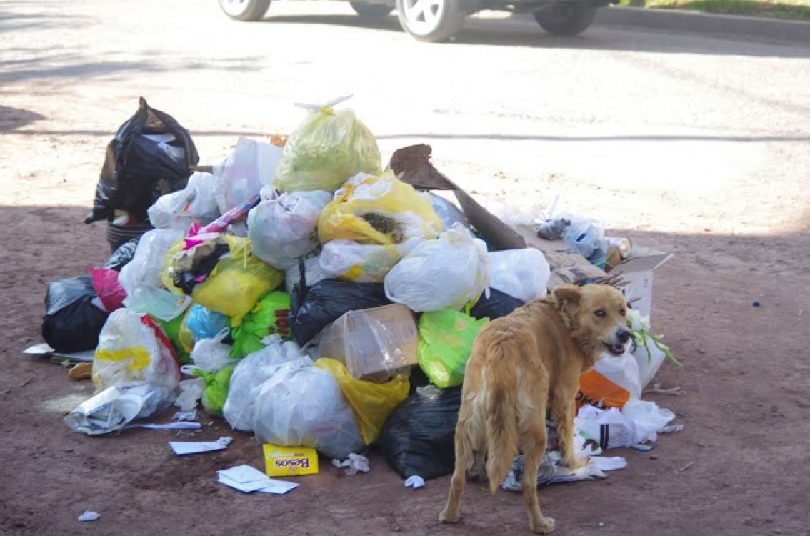 trash and dog
