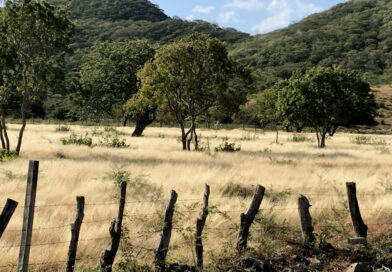 Nicaragua: U.S. sanctions will disrupt sustainable beef production and reforestation