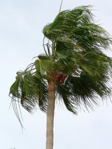 palm-tree-blowing-in-the-wind