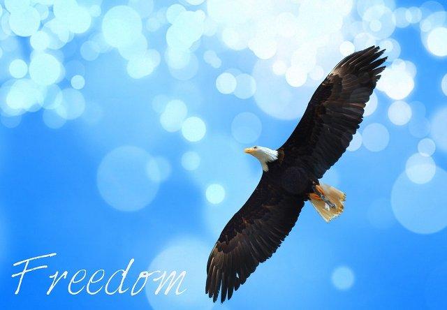 freedomwitheagle