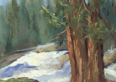 Sequoia Spring