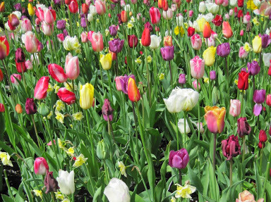 Getting to Keukenhof on a Day Trip from Amsterdam