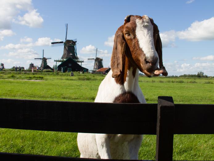 Day trip from Amsterdam to zaanse schans