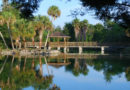 Favourite 5 'Cool' Places to Swim in Florida