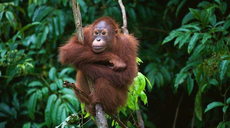 Explore Crocker Range Park – Malaysia