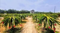 Get Your Fruit Fix at Agro-Tourism Farms!