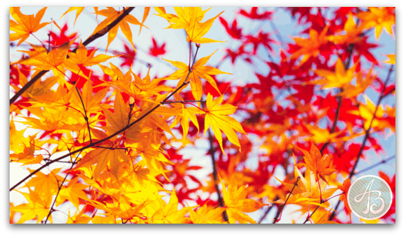 Changing_Leaves