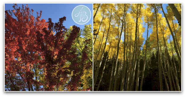 Fall_leaves_flagstaff