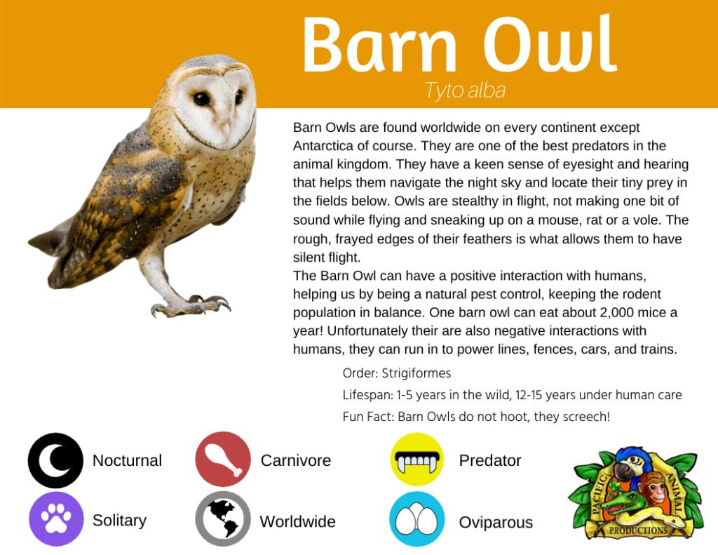 Barn Owl Info