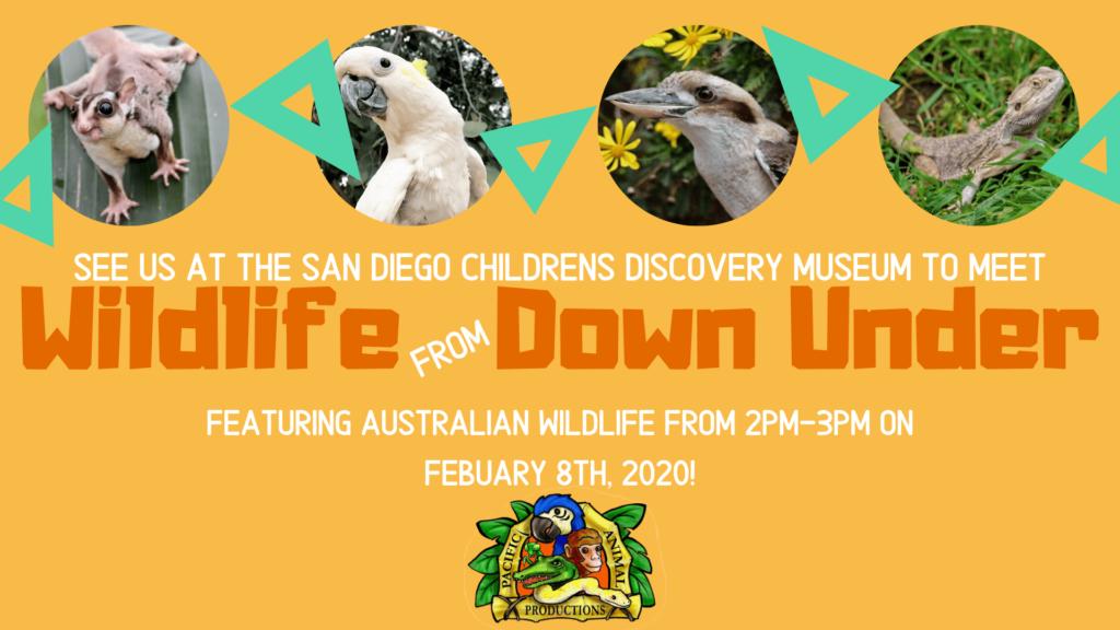 Wildlife Down Under