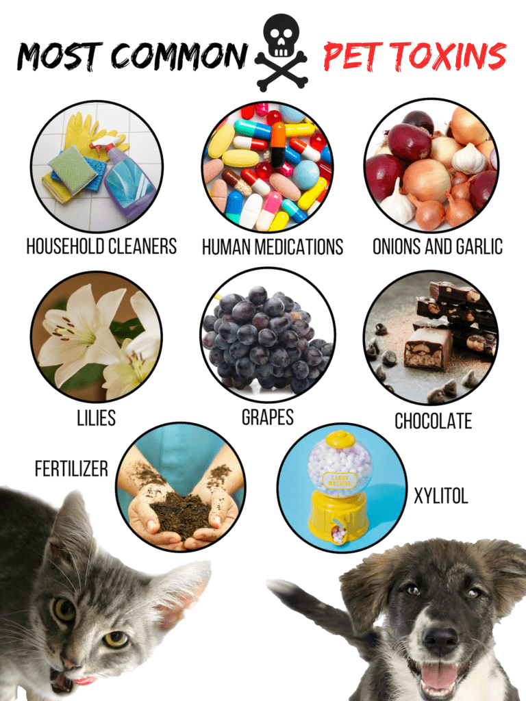 Common Pet Toxins
