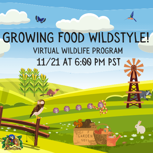 Virtual Animal Program