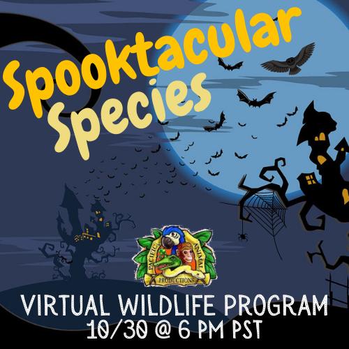 Virtual Wildlife Program