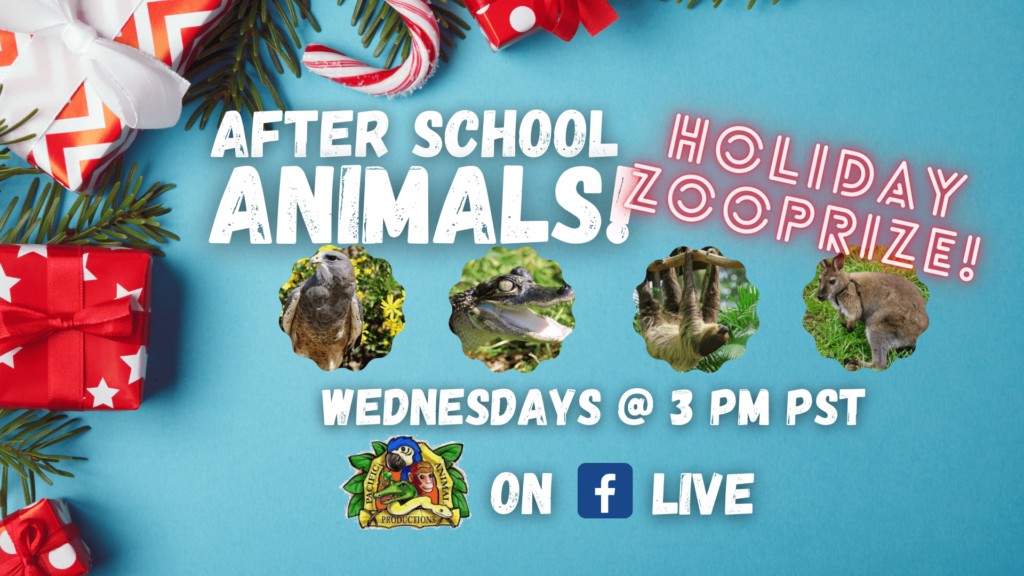 Virtual Live All about animals, holiday zooprize