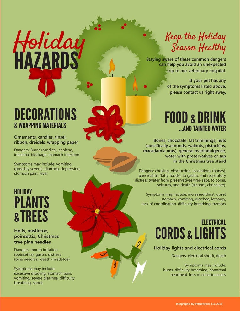 Holiday Pet Hazards, what is toxic to your pet during the holidays