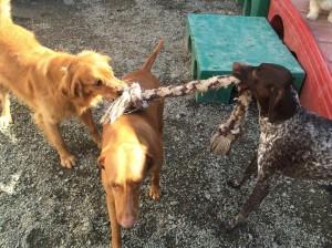 doggy daycare albany ny