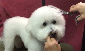 Pet Grooming Troy, NY