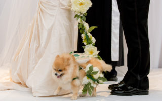 bride and groom with dog at wedding ceremony