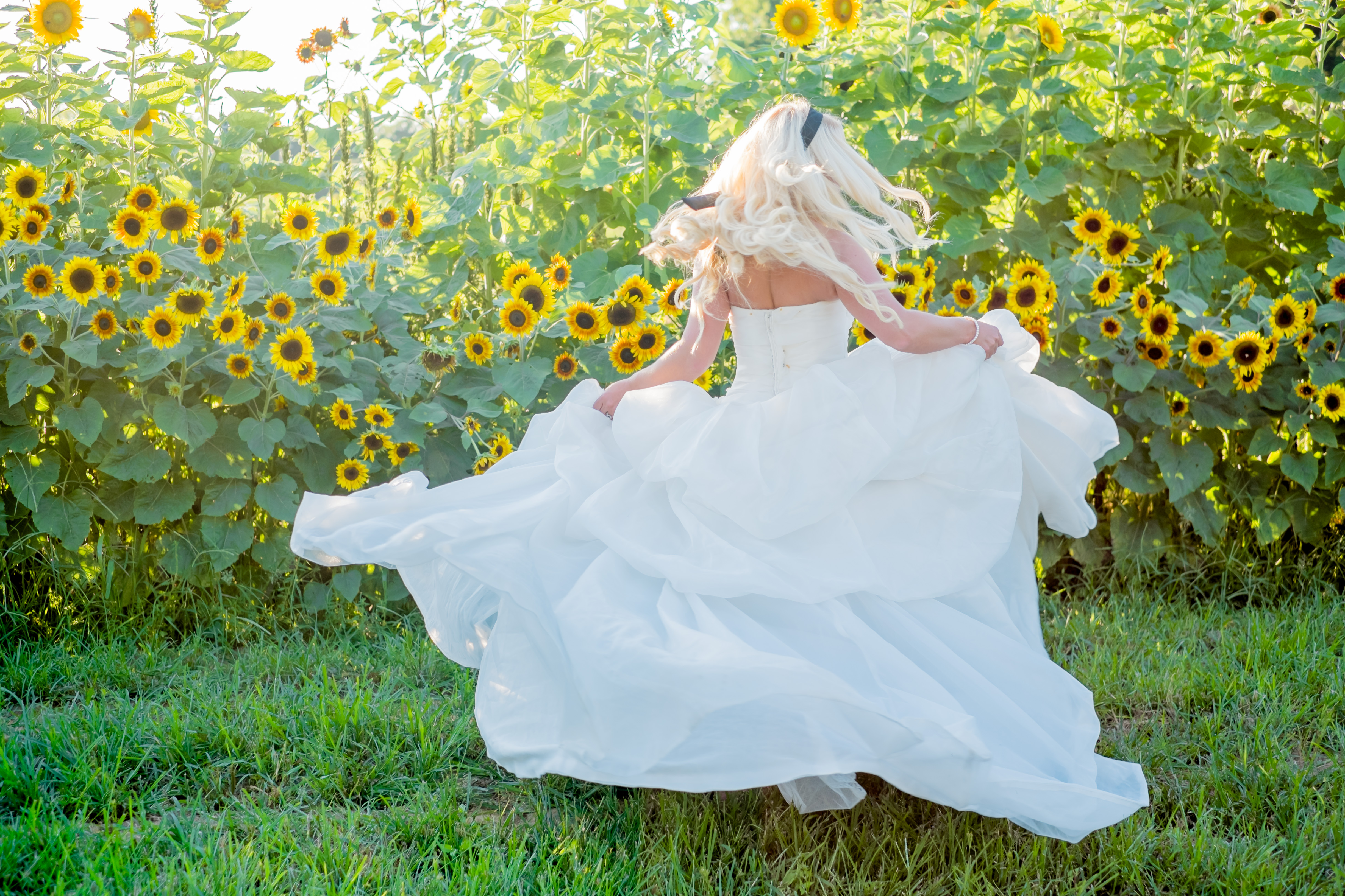 bride in ballgown spinning outside sunflower field