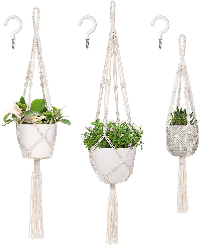 hanging plants indoors