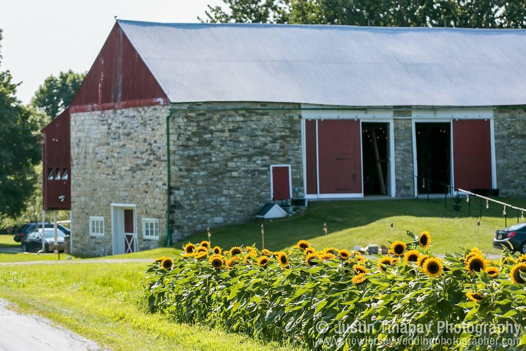 farm with sunflowers