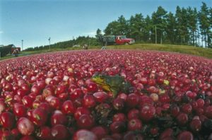 Read more about the article Cape Cod Cranberry Growers' Association Announces Rhapsody in Red Exhibit Tour