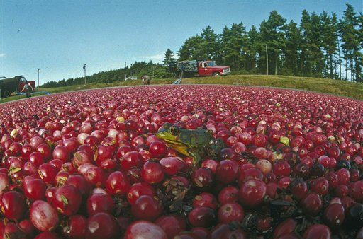State Releases Cranberry Industry Task Force Recommendations