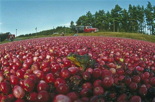 Cape Cod Cranberry Growers' Association Announces Rhapsody in Red Exhibit Tour