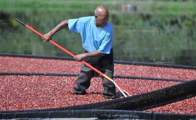 CRANBERRIES: State charts course for industry's future