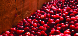 A GROWING LEGACY:  200 Years of Cranberries