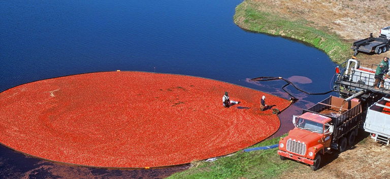 MA Cranberry Growers Launch State-Grown Fruit Insignia