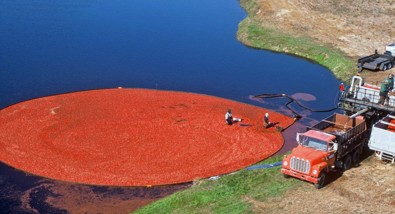 Read more about the article Locally Grown Cranberries to Feature New Insignia
